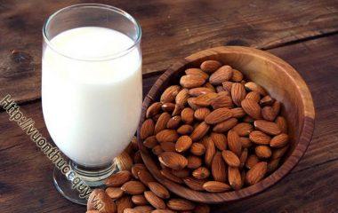 Cách Chế Biến Sữa Hạnh Nhân không hề khó nhưng đối với nhiều người thì nó hơi tỉ mỉ, đổi lại bạn sẽ có những cốc sữa hạnh nhân thơm ngon, bổ mát...
