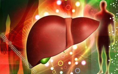 Bệnh Viêm Gan C là bệnh truyền nhiễm do Hepatitis C virus (HCV) gây nên, là một bệnh thầm lặng nhưng để lại những hậu quả rất nặng nề...