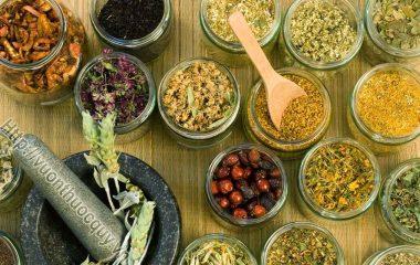 Các Vị Thuốc Nam như: Giảo Cổ Lam, Khổ Qua, Dây Thìa Canh... dùng độc vị hoặc được phối hợp cùng với các bài thuốc đã được y học cổ truyền sử dụng để...