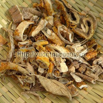 Tang Bạch Bì ( Vỏ Rễ Cây Dâu )
