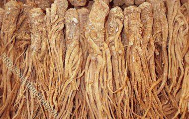 Đương Quy Hỗ Trợ Bổ Huyết; Đương quy còn gọi xuyên quy, là rễ đã phơi hay sấy khô của cây đương quy (Angelica sinensis (Oliv.) Diels.)...
