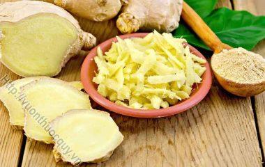 Những Công Dụng Đặc Biệt Của Củ Gừng; Gừng từ lâu được coi là gia vị được sử dụng trong mỗi bữa ăn gia đình. Ngoài giá trị về dinh dưỡng...