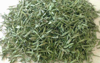 Cỏ Ngọt Thực Phẩm Cho Người Tiểu Đường; Cỏ ngọt Stevia có tên khoa học là Stevia rebaudina, thường được gọi là lá đường, lá ngọt, lá mật...