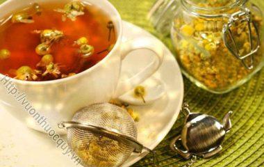 Những Lý Do Nên Uống Trà Hoa Cúc Thường Xuyên; Hoa cúc là một loại thảo dược đa tác dụng, được sử dụng như một phương thuốc truyền thống...