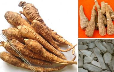 Bạch Chỉ Hỗ Trợ Điều Trị Cảm Phong Hàn; Bạch chỉ còn gọi là hương bạch chỉ, phong hương. Bạch chỉ có nguồn gốc từ Trung Quốc, được trồng nhiều ở...