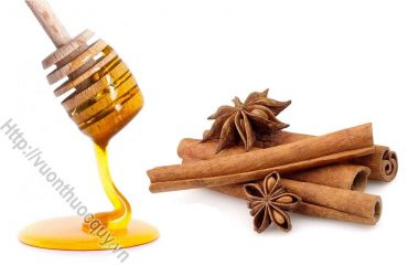 Quế Giúp Tăng Cường Trí Nhớ; Từ xưa quế đã là một trong 4 vị thuốc quý (tứ bảo) của Đông y: Sâm, nhung, quế, phụ. Ngày nay, quế và bột quế...
