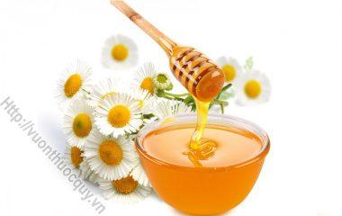Mặt Nạ Hoa Cúc Đánh Bay Mụn Đầu Đen; Không chỉ có tác dụng về mặt y học, hoa cúc khô còn giúp ích cho việc làm đẹp của các chị em. Loại mặt nạ này thích hợp đối với loại da dầu...