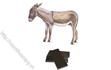 A Giao ( Colla asini, Gelatinium Asini, Gelatina nugra) là keo chế từ da con lừa ( Equus asinus L.) thuộc ngành động vật có xương sống ( Vertebrata)...