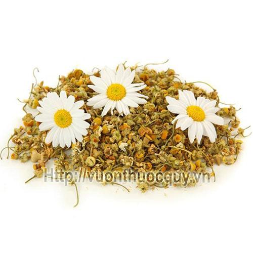 hoa cúc khô 1