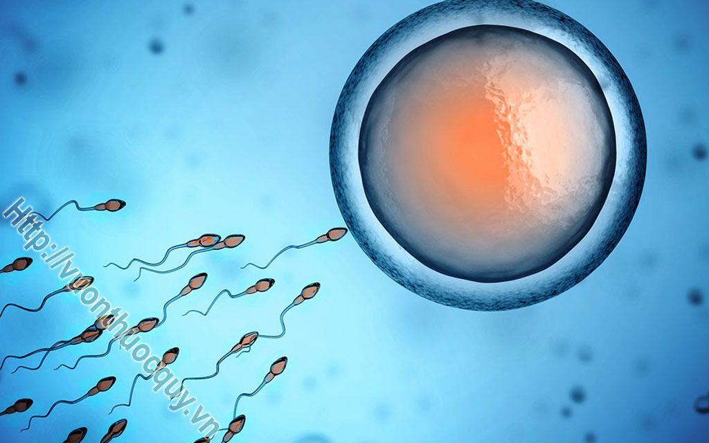 tinh trùng yếu có gây vô sinh không ?