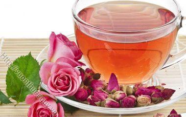 Hoa Hồng Thuốc Quý Cho Sức Khỏe; Hoa hồng không chỉ là một loài hoa đẹp mà còn nhiều tác dụng rất tốt cho sức khỏe thể chất và tinh thần...