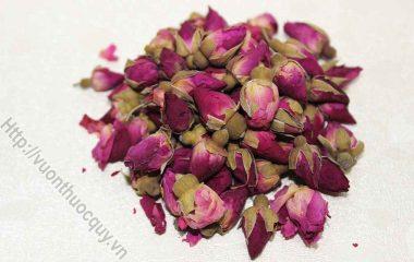Bài Thuốc Hay Từ Hoa Hồng; Có nhiều loại hoa hồng nhưng Đông y thường sử dụng hồng đỏ (mai khôi hoa) và trắng (hồng bạch)  để...