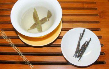 Những Lưu Ý Khi Sử Dụng Chè Đắng; Trà đắng sử dụng ở nước ta, chủ yếu được chế biến  từ lá non của cây chè đắng Cao Bằng, đồng bào còn gọi...
