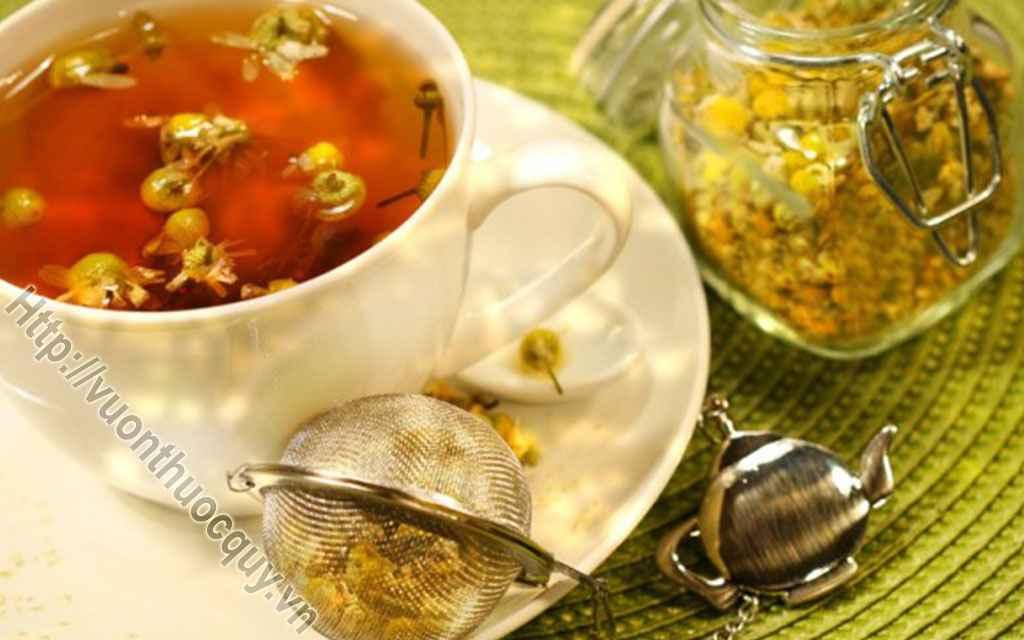 Những Lý Do Nên Uống Trà Hoa Cúc Thường Xuyên