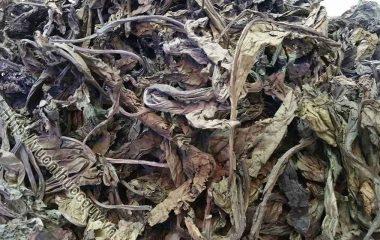 Bồ công anh là cây của những vùng ẩm và lạnh của Bắc và Nam bán cầu. Ở Việt Nam, cây mọc hoang dọc theo đường đi, sân vườn, bãi đất hoang, nơi đất ẩm, dựa bờ nước, ở những vùng núi cao như Đà Lạt...