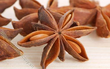 """Hoa Hồi Làm Thuốc; Hoa hồi hay còn gọi là đại hồi, quả hồi hoặc bát giác hồi hương, tiếng Trung có nghĩa là """"tám cánh"""", là một loài cây gia vị..."""