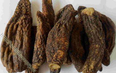 Nhục thung dung là một loại thảo dược được ghi chép vào nhiều sách trong đông y thời xưa với công dụng bổ dương, thận, ích tinh huyết, nhuận tràng… có hương vị ngọt, chua mặn, tính ôn...