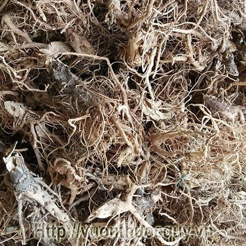 Rễ Bồ Công Anh Khô