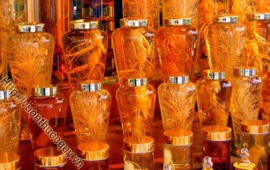 """3 Loại Rượu Thuốc Bổ Dương; Trong y học cổ truyền, các loại rượu thuốc có công dụng bổ dương cường tinh, giúp cho các đấng """"mày râu"""" tăng cường khả năng chăn gối..."""