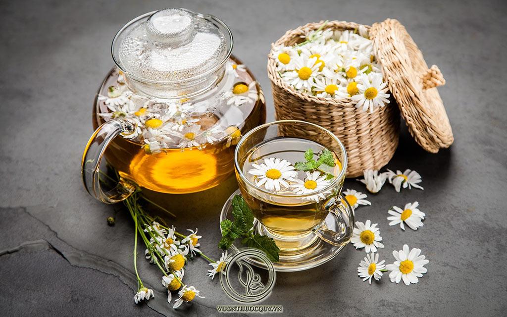 Tác Dụng Và Cách Dùng Cúc Hoa