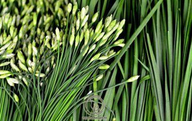 Hạt hẹ còn gọi cửu tử, tên khoa học: Allium tuberosum Rottl. et Spreng. [Allium uliginosum G. Don.], họ hành (Alliaceae). Hẹ được trồng nhiều ở miền núi, trung du và đồng bằng, nhân dân dùng hẹ trong chế biến món ăn đem...