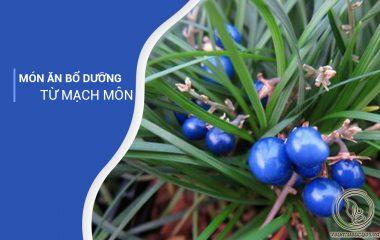 Cây mạch môn là một loại cây thân thảo. Mạch môn cao từ 10 – 40cm, thường xanh và sống lâu năm. Lá cây mạch môn là lá thẳng, có màu xanh lục. Lá có bề mặt dài và hẹp, cuống có bẹ. Lá dài khoảng 20 – 40cm, rộng từ 1 – 4mm...