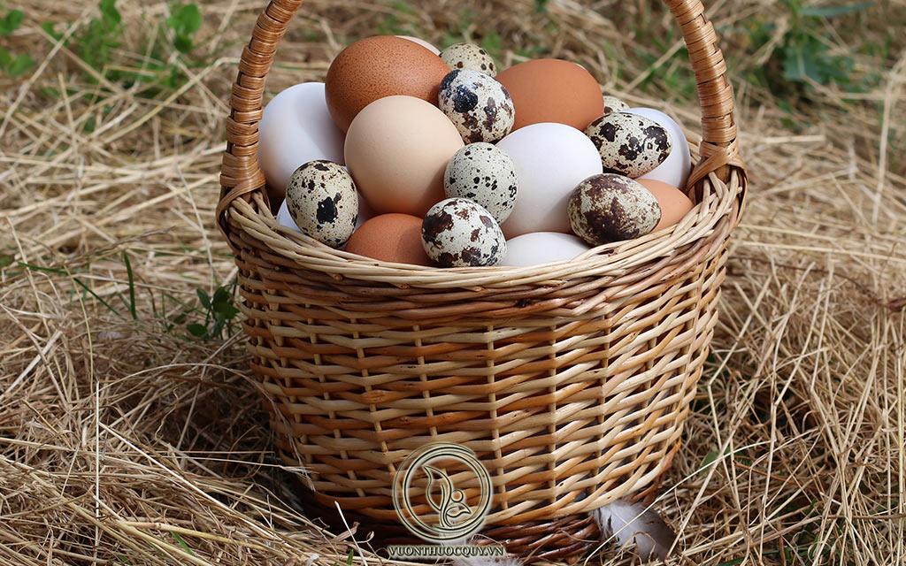 Bệnh Gout Có Được Ăn Trứng Không ?