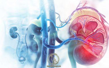 Tăng Huyết Áp Trong Bệnh Thận Mạn là tình trạng thường gặp. Do việc tăng huyết áp và bệnh thận có mối quan hệ tương quan, tác động lẫn nhau. Người mắc bệnh về thận có thể nhận thấy triệu chứng thông qua việc thay đổi huyết áp...