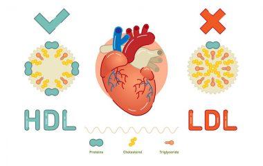 Cholesterol cao gây ra sự tích tụ mảng bám có thể chặn sự lưu thông máu trong các động mạch và dẫn đến nguy cơ mắc bệnh nhồi máu cơ tim hoặc đột quỵ. Nếu bạn muốn giữ cho trái tim mình luôn khỏe mạnh, điều quan trọng...