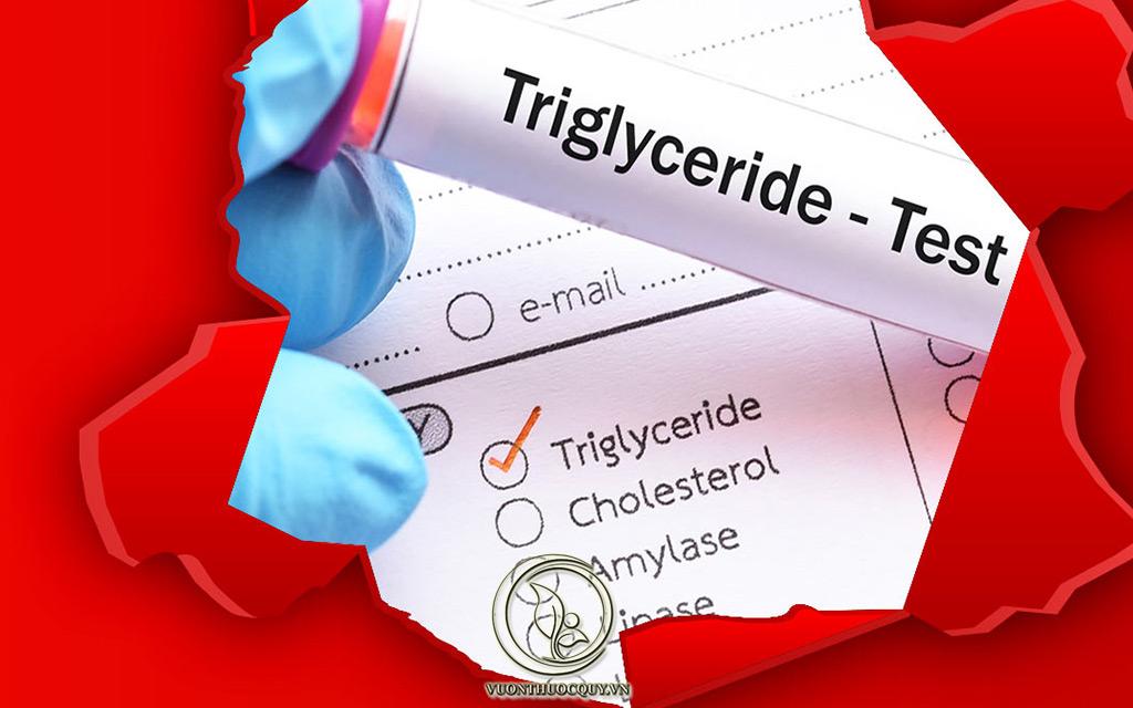 Triglyceride Máu Là Gì ?